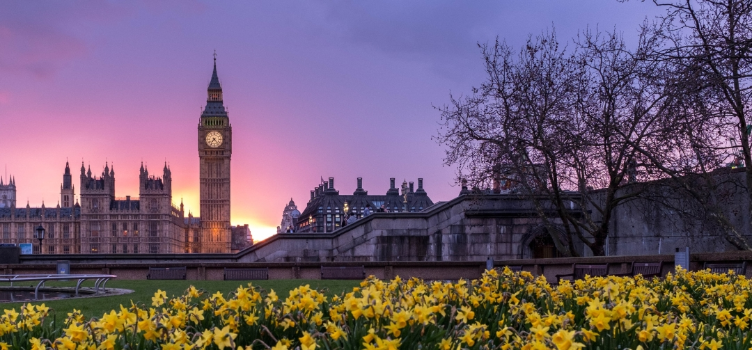 A photo of big ben with the sun setting behind it, with daffodils in the foreground